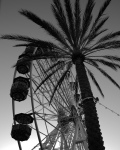 ferris wheel and palm tree black and white