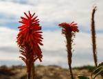 beach flower close up